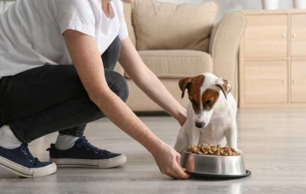 What Dog Food is Killing Dogs